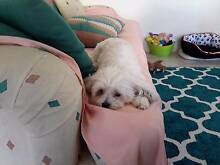 Mature lady & small female dog looking for home Maroochydore Maroochydore Area Preview