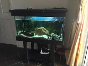 Fish tank, fish, filter & heaps more Munno Para West Playford Area Preview