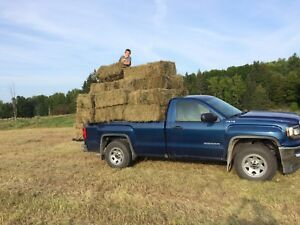 1st cut hay