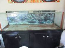aquarium on stand Burleigh Waters Gold Coast South Preview