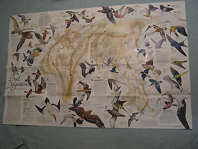 BIRD MIGRATION MAP EASTERN+ WESTERN HEMISPHERE National Geographic April 2004