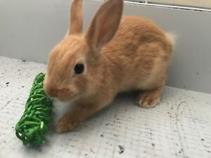 Bunny need a new home