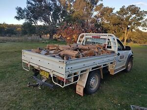 Firewood yellow box split,stacked and delivered Armidale Region Preview