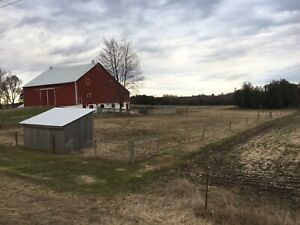 Horse Barn FOR RENT