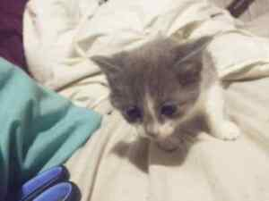Free kitten Bray Park Pine Rivers Area Preview
