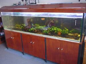 8 FT  FISH TANK  COMPLETE Sippy Downs Maroochydore Area Preview