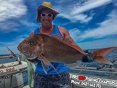 snapper Caught port phillip bay