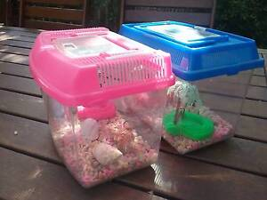 Small hermit crab homes 25 the pair Wembley Cambridge Area Preview