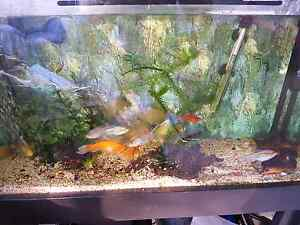 Fishtank 3ft with fish AND accessories Canberra City North Canberra Preview
