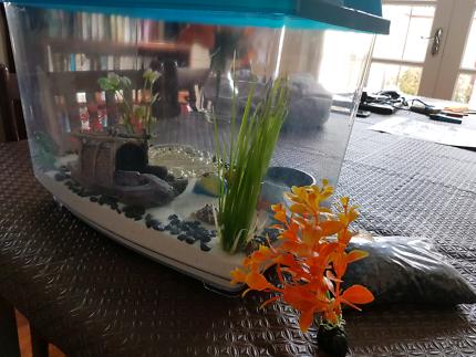 Hermit / Fish Tank & Accessories