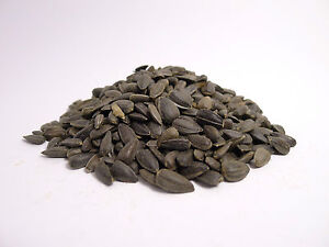 Black Sunflower Seeds for wild birds with a naturally high oil content 25KG