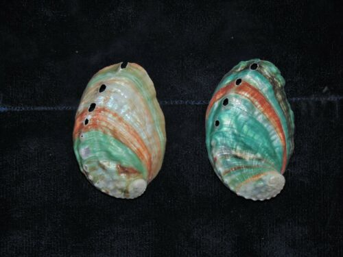 TWO (2) RUSSIAN GREEN AND RED ABALONE SEA SHELLS, BEACH DECOR CRAFT REEF