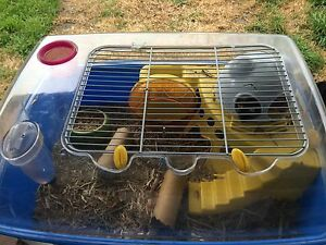 3 Black Male Mice with Cage Included Armidale Armidale City Preview