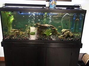 75 gal aquarium