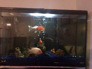 120 gallon fish tank with lots of fish for sale