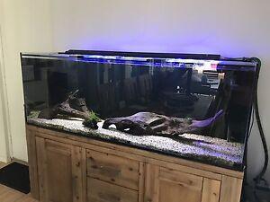 Custom Made Aquarium Setup Dianella Stirling Area Preview