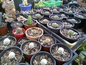 Assorted cactus from