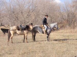 Colt starting and horse training