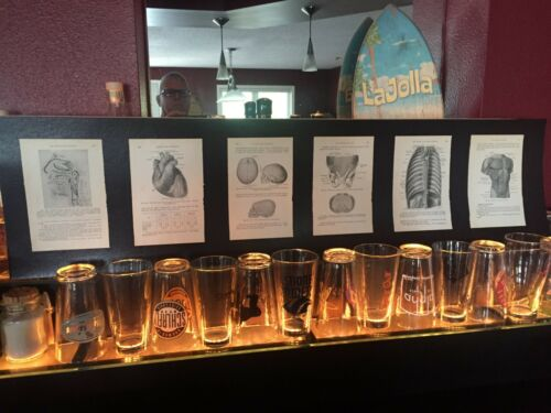 Med Morbid Oddity: Six Medical Plates Gothic Scientific Laboratory Display Piece