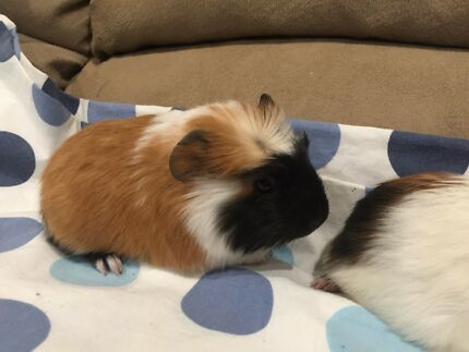 BABY BROTHER PIGGIES. :))