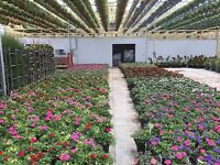 Greenhouse help wanted
