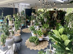 🌿Indoor / patio plants, cactus , pots & baskets. Prices start $15 Worongary Gold Coast City Preview