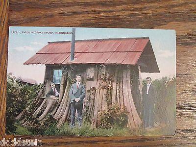 Vintage Postcard CABIN IN CEDAR STUMP - WASHINGTON - Mitchell - 1 cent