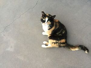 Outdoor Cat Raworth Maitland Area Preview