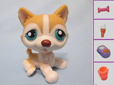 Littlest Pet Shop Dog Husky Teal Eyes 386 and Free Accessory Authentic Lps