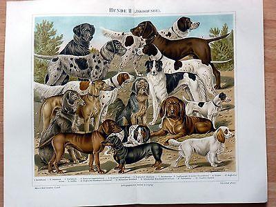 Hunde II. Alte Farblithographie (um 1905) Sehr dekorativ!