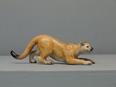 Cute Northern Rose Cougar Crouching