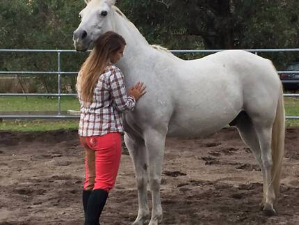 Healing with Horses & Equestrian Specialist