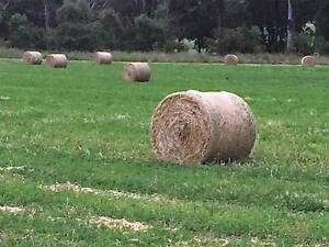 LUCERNE HAY FOR SALE - FRESH NEW SEASON LUCERNE LARGE ROUND BALES Crookwell Upper Lachlan Preview