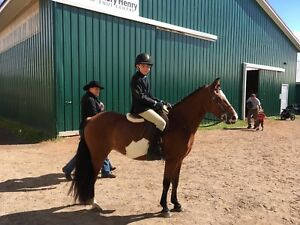 Small Pony 12'2 hh with show experience