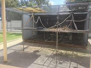 Suspended Aviary Birds Gumtree Australia Free Local