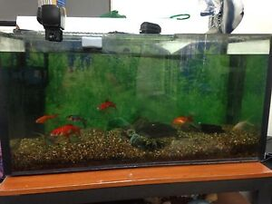 Fish tank, fish, fish feeder Springwood Blue Mountains Preview