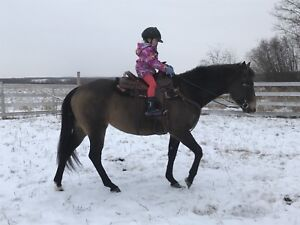 APHA mare - All arounder