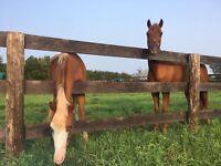 Horse farm staff