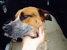 Found Rutherford sweet boy Rutherford Maitland Area Preview