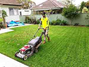 Dave's 5 star lawns & gardens Gymea Sutherland Area Preview