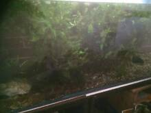 Aquarium plants Armidale 2350 Armidale City Preview