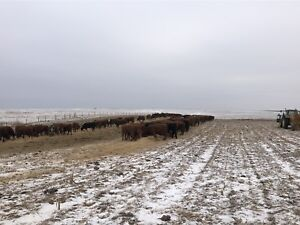 ISO pasture southern AB
