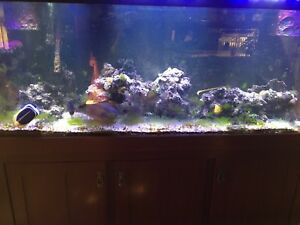 Salt water large aquarium  200 gallon all included!