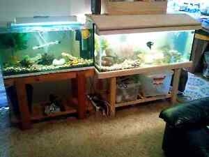 Fish tanks and fish sold seperately Moe Latrobe Valley Preview