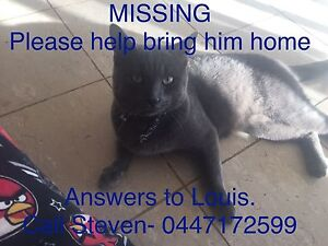 Please bring Louis home!!!! Albany Creek Brisbane North East Preview