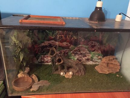 Lizard Tank with Accessories  Queenstown Port Adelaide Area Preview