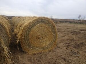 ***OAT STRAW & GRASS MIXED ROUND BALES***
