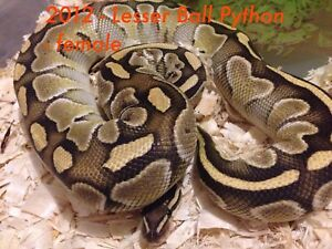 Snakes for Sale