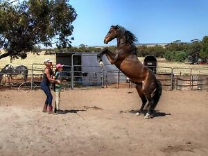Horsemanship lessons Byford Serpentine Area Preview