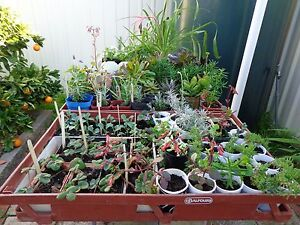 GARAGE / PLANT SALE IN A CAFE. West Richmond West Torrens Area Preview
